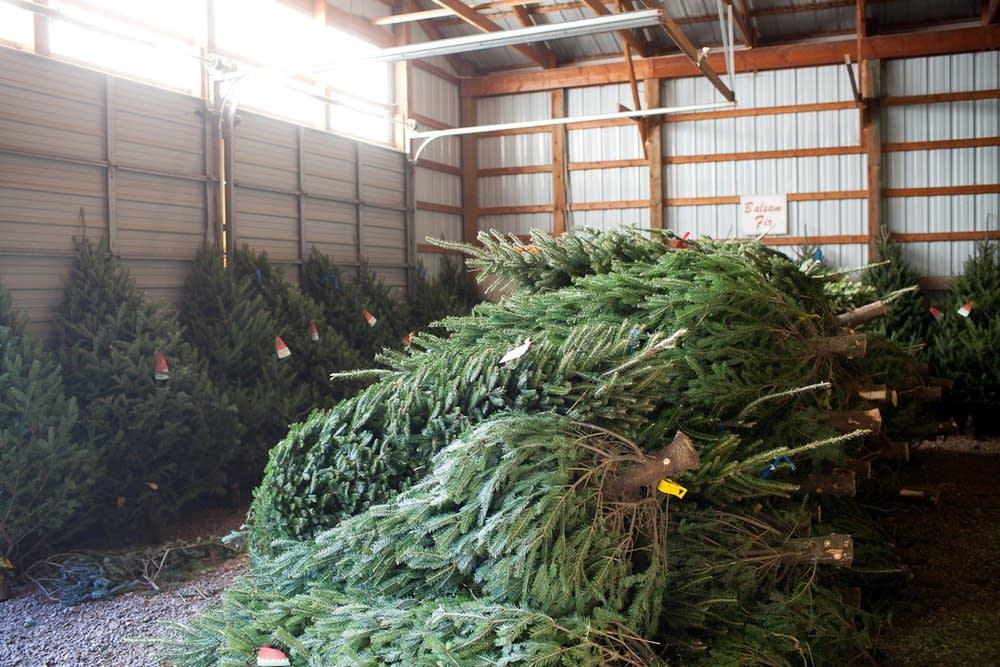 Pre-cut Christmas trees