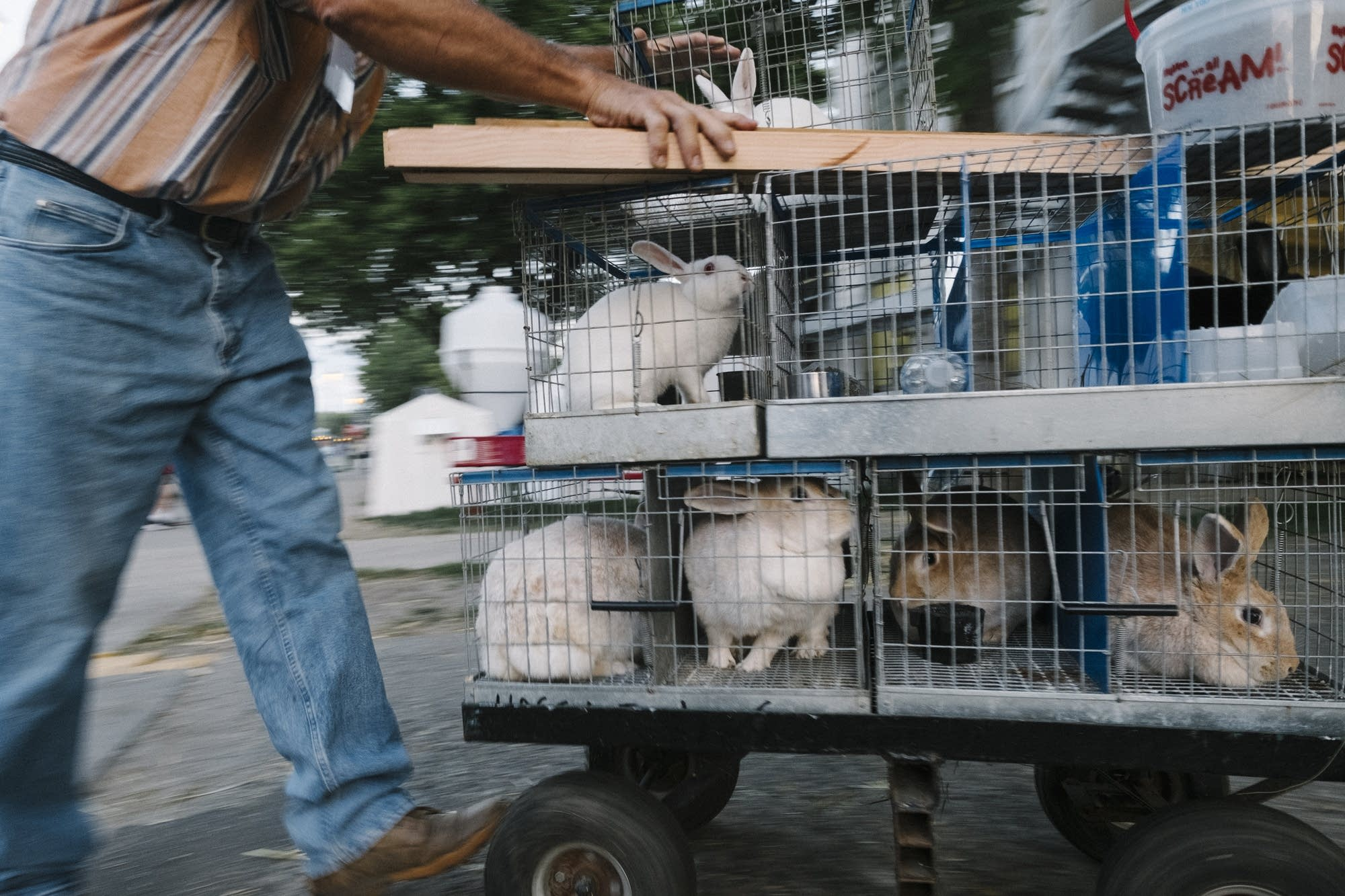 A cart of rabbits gets pushed into the poultry barn.