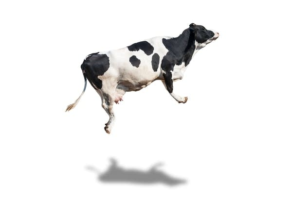 The Whole Holstein