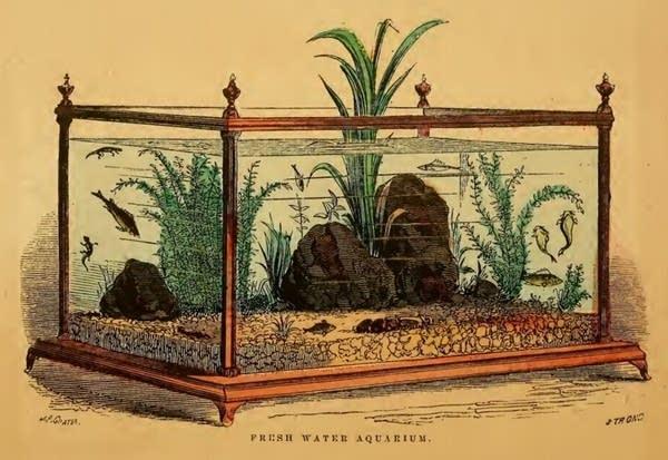 'The Family Aquarium,' Henry D. Butler, 1858.