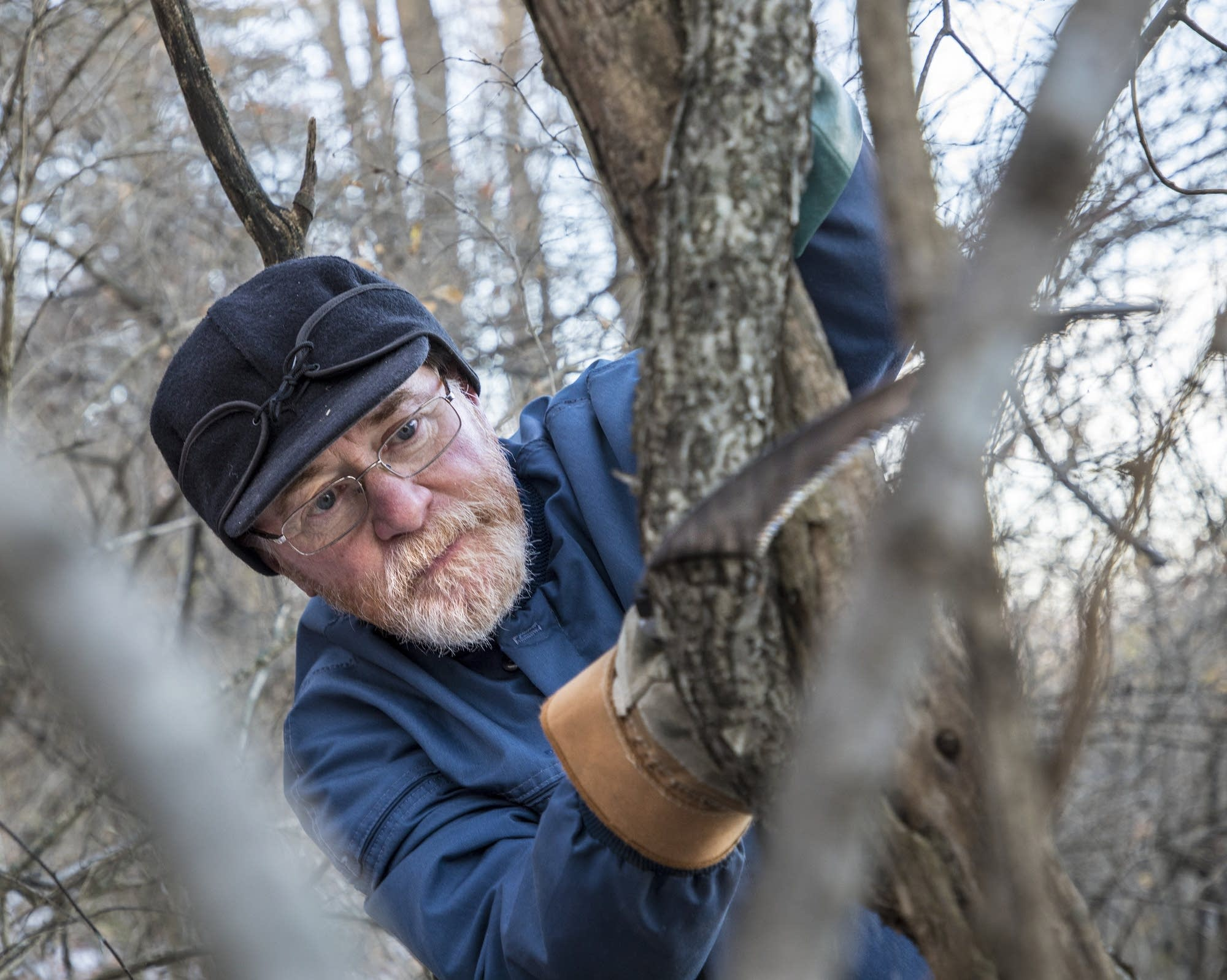 Bruce Eng of Winona uses a tree saw.