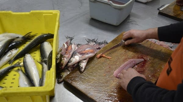Filleting the roe
