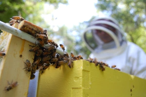 Sharon Stiteler looks over part of a hive