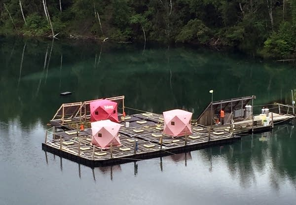 Rafts equipped with underwater bioreactors in a mine pit lake