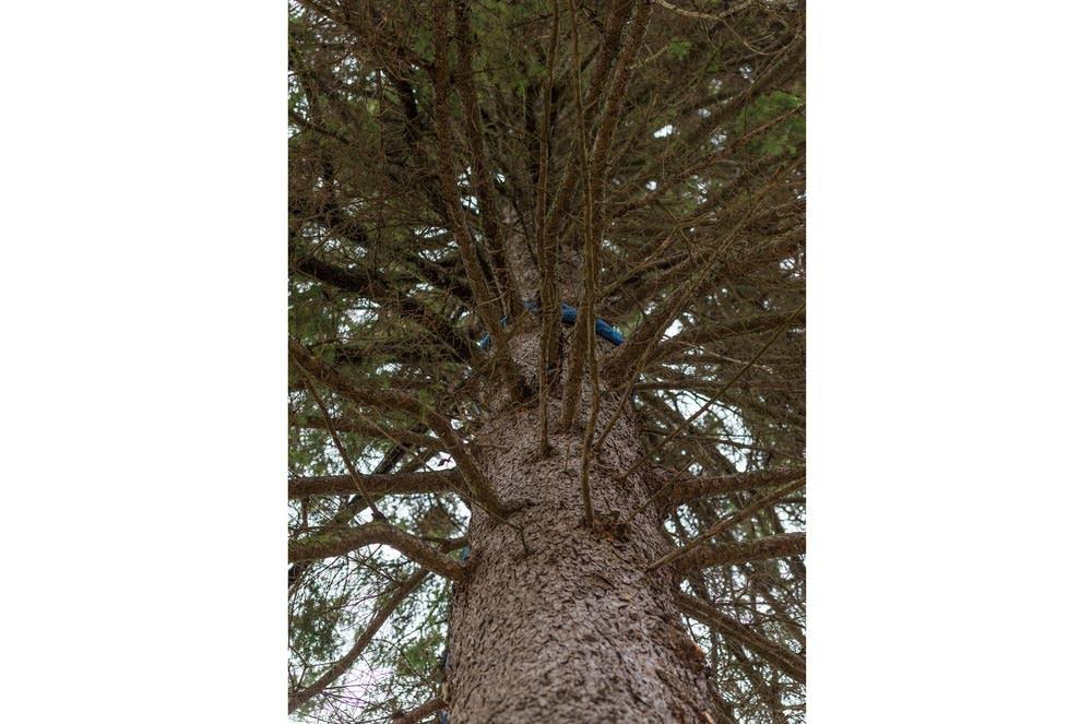 The chosen tree