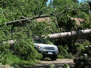 A tree fell on a pickup of Darla and Jeff Swanson.