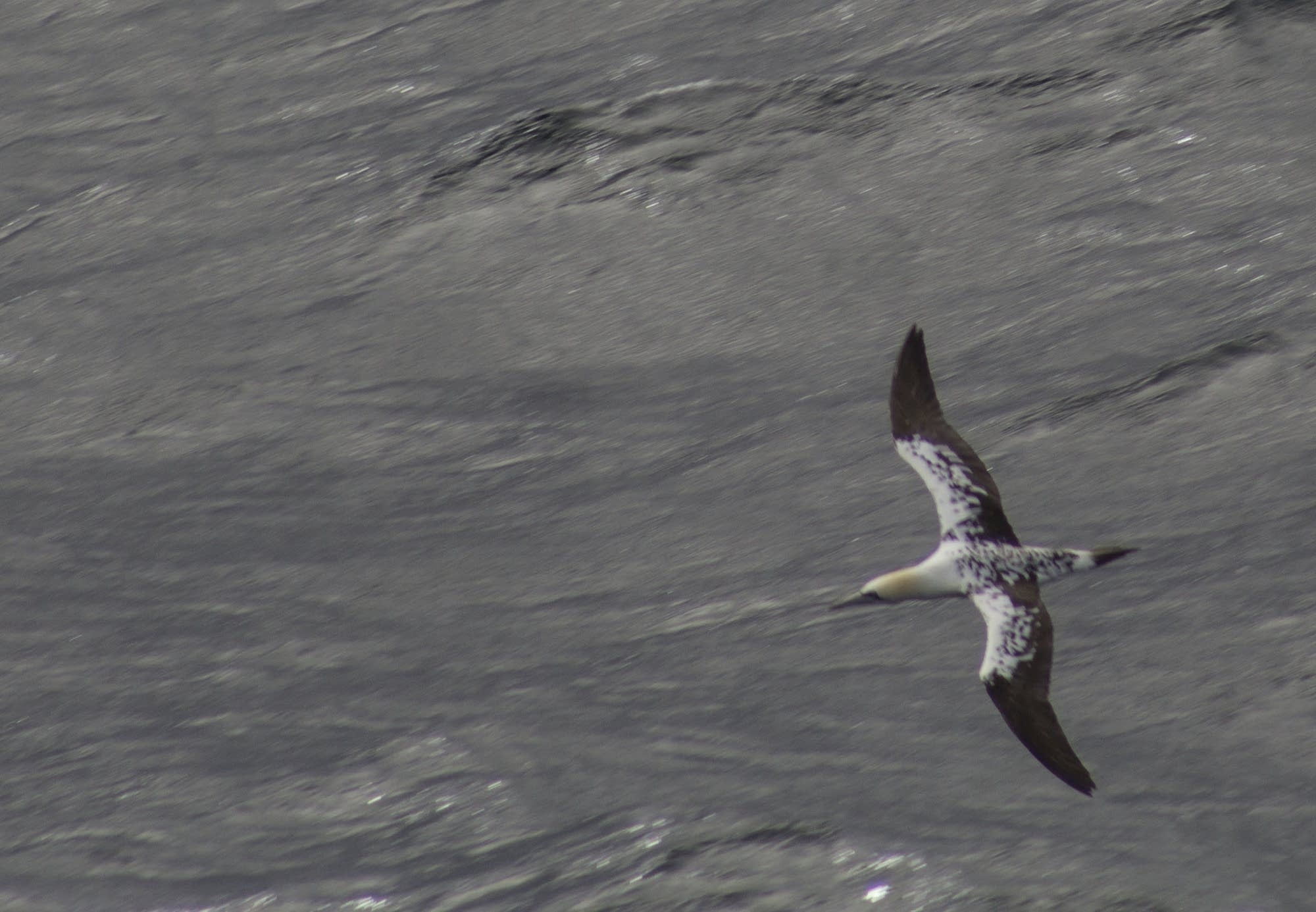 North Sea - 01 - bird from above