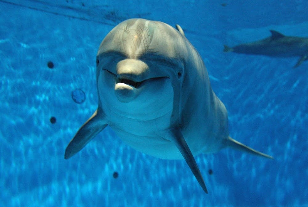 April the dolphin