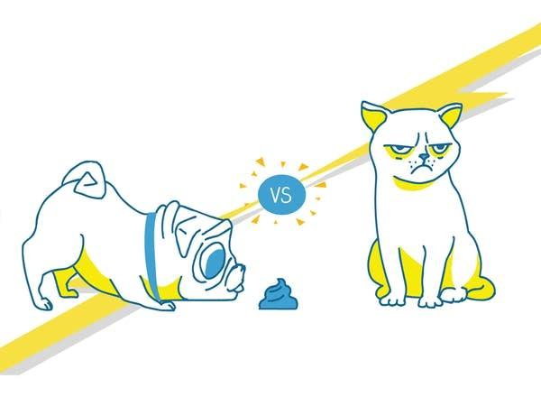 Smash Boom Best: Cats vs. Dogs