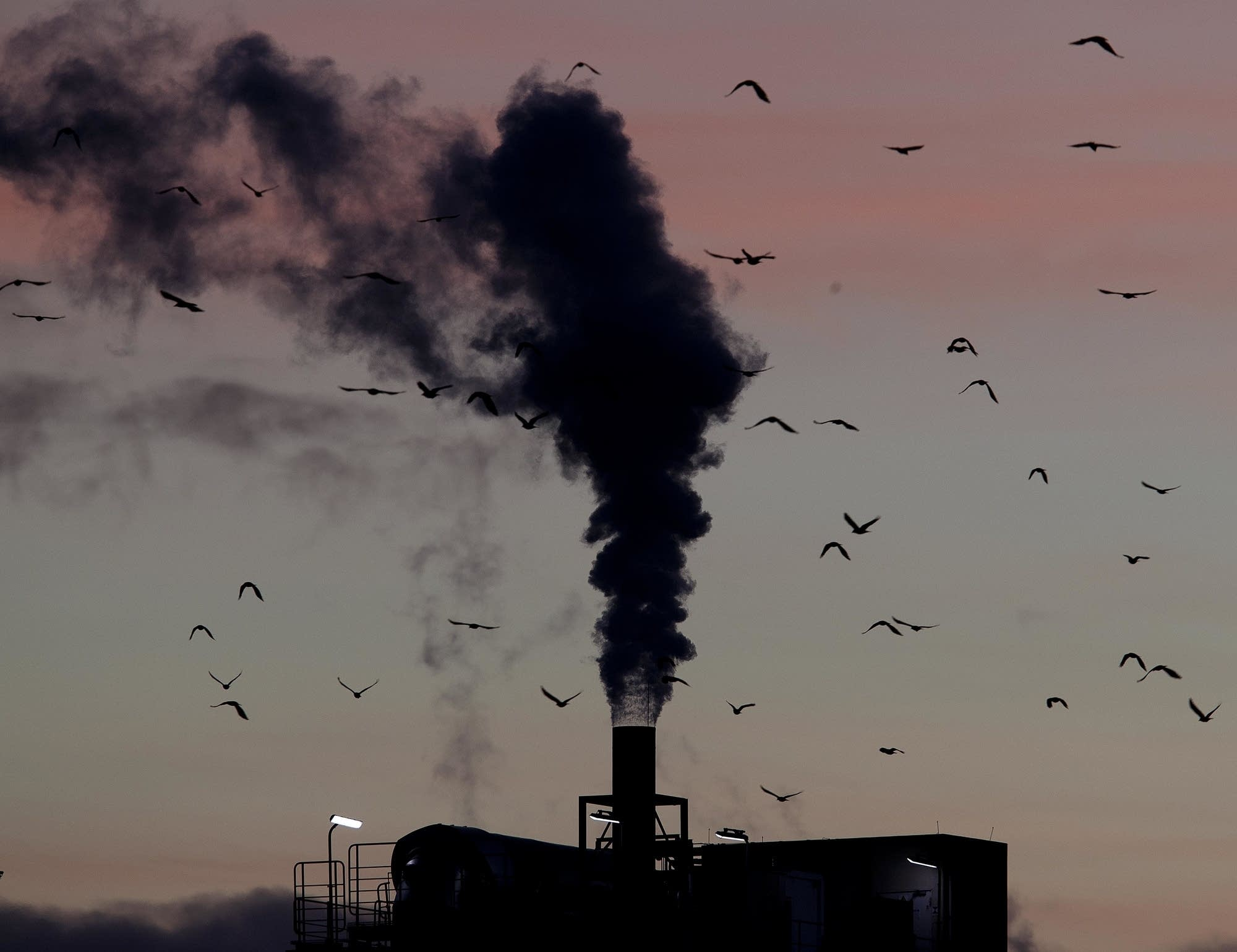 Birds fly past a smoking chimney in Ludwigshafen, Germany.