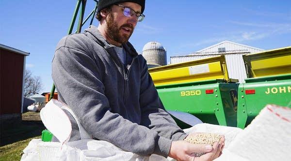Ryan Klassen inspects pea seeds