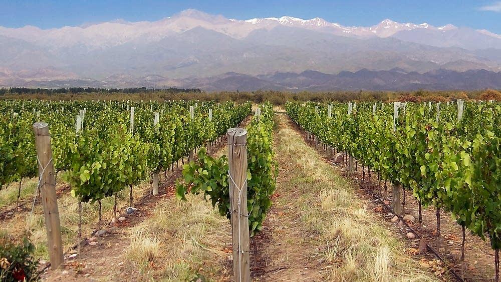 mendoza argentina vineyards