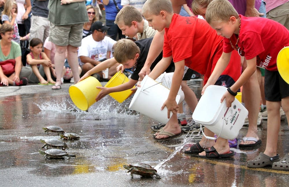 Minnesota Daily Life - Nisswa Turtle Races