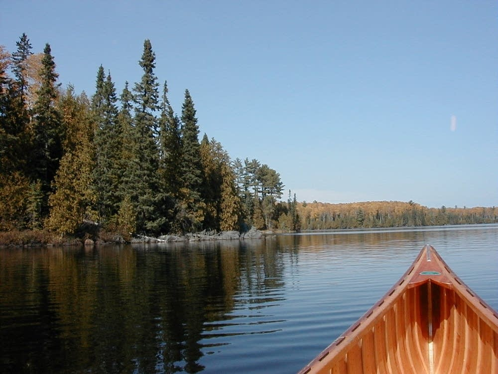 Protecting Minnesota S Changing Northern Forests Mpr News