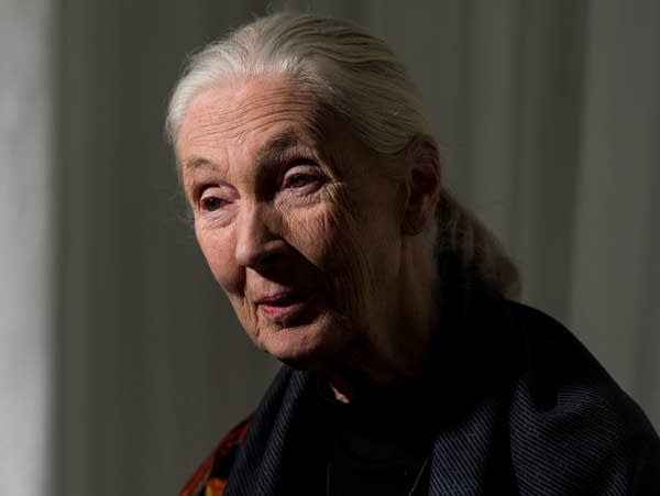 Dr. Jane Goodall arrives for a National Geographic event in January.