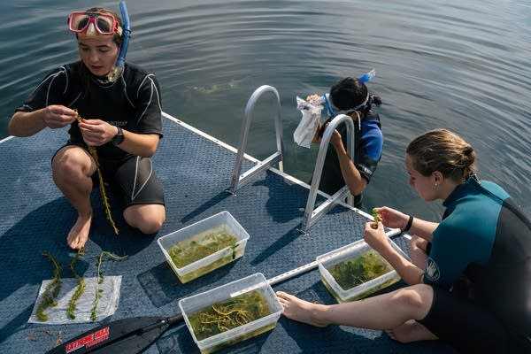 Three young women examine plants on the deck of a boat.