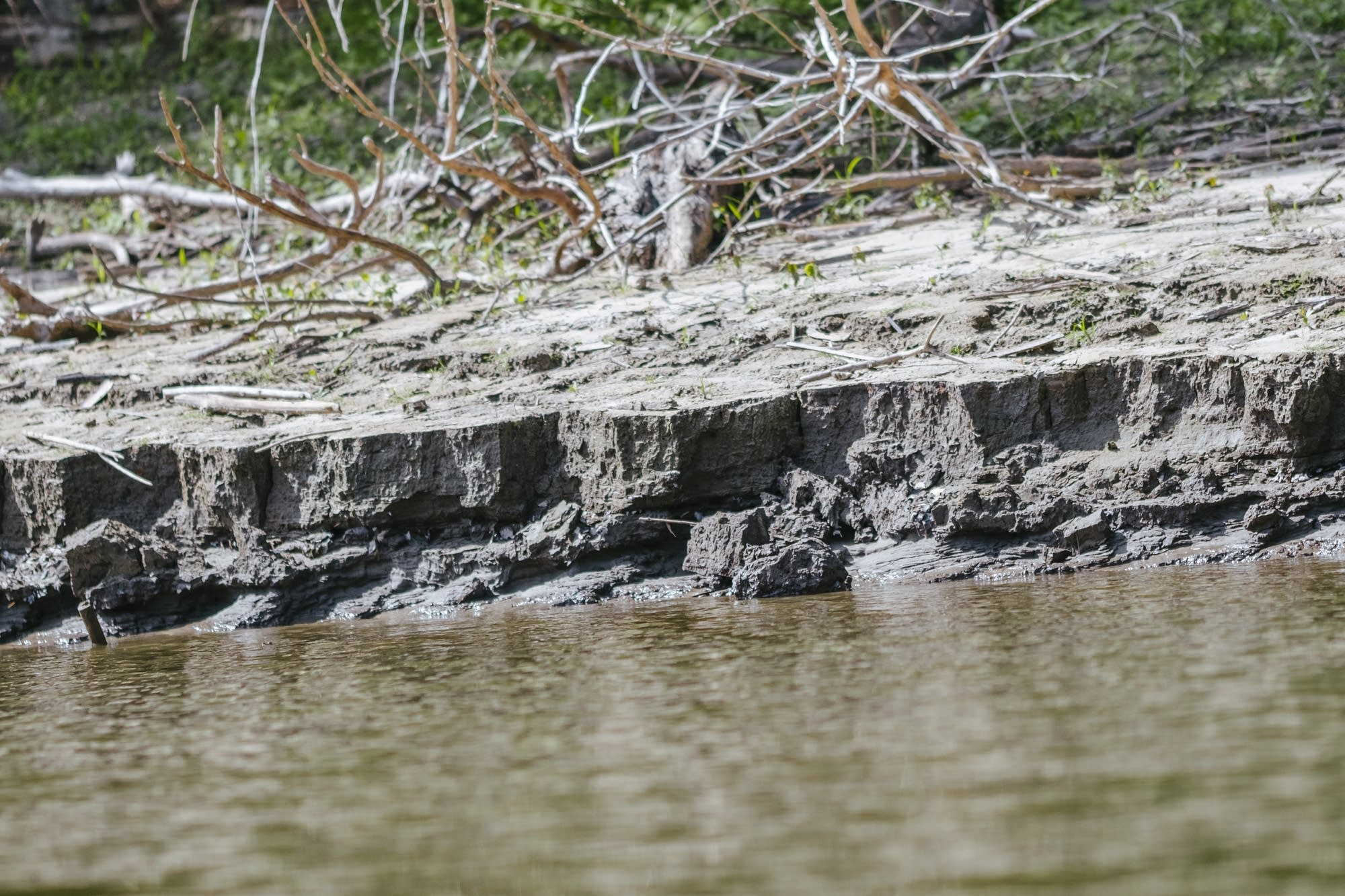 Erosion cuts away the shoreline of the Mississippi River.
