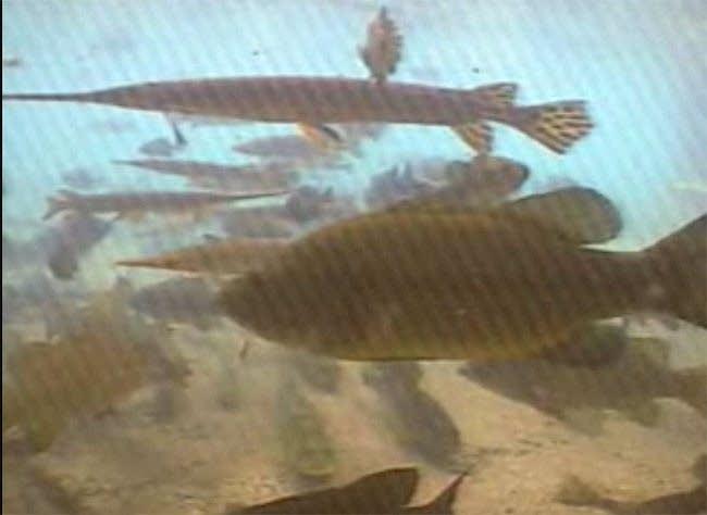 Fish cam