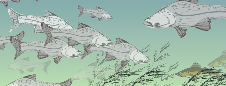 Runaway carp population growth