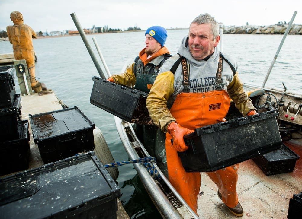 Hauling herring