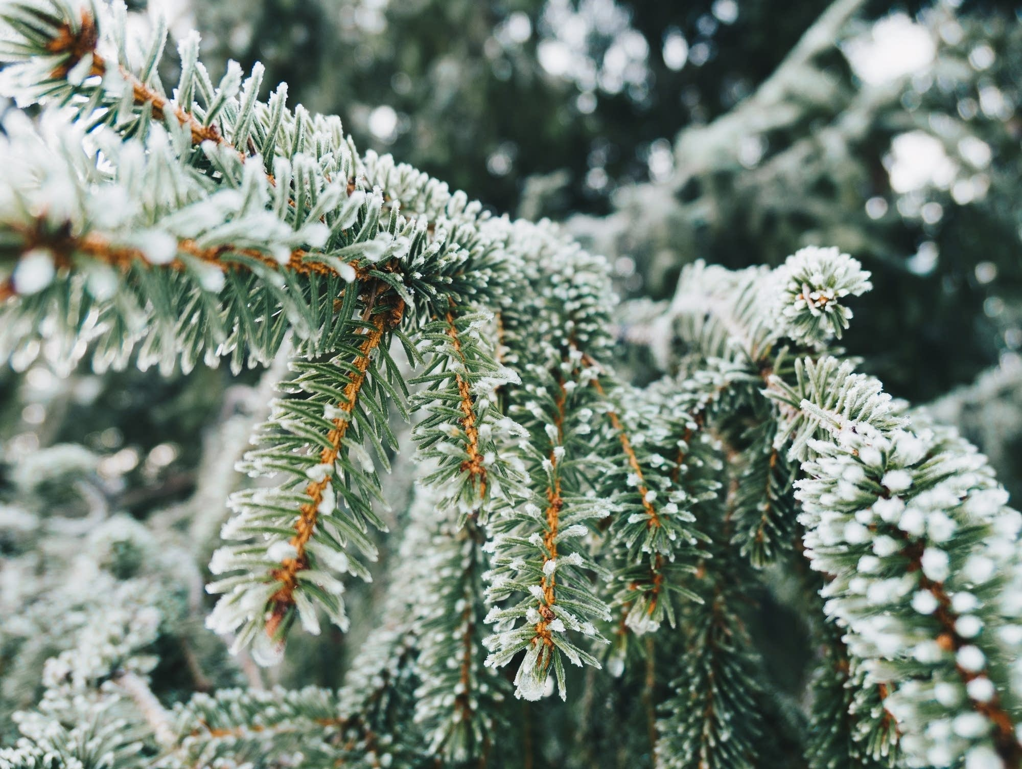Snow coats an evergreen tree.