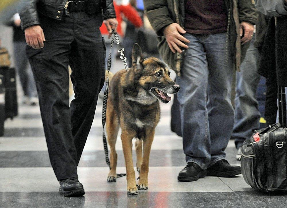 Bomb-sniffing dog