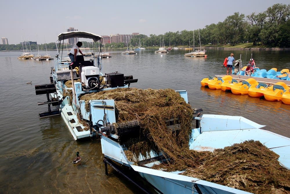 Milfoil removal