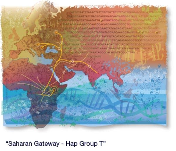 Haplo group T