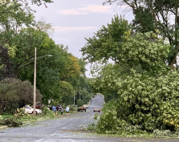 Uprooted and downed trees after a severe storm.