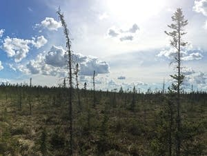 A panorama of the Big Bog