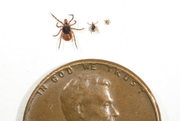 Ticks and a penny