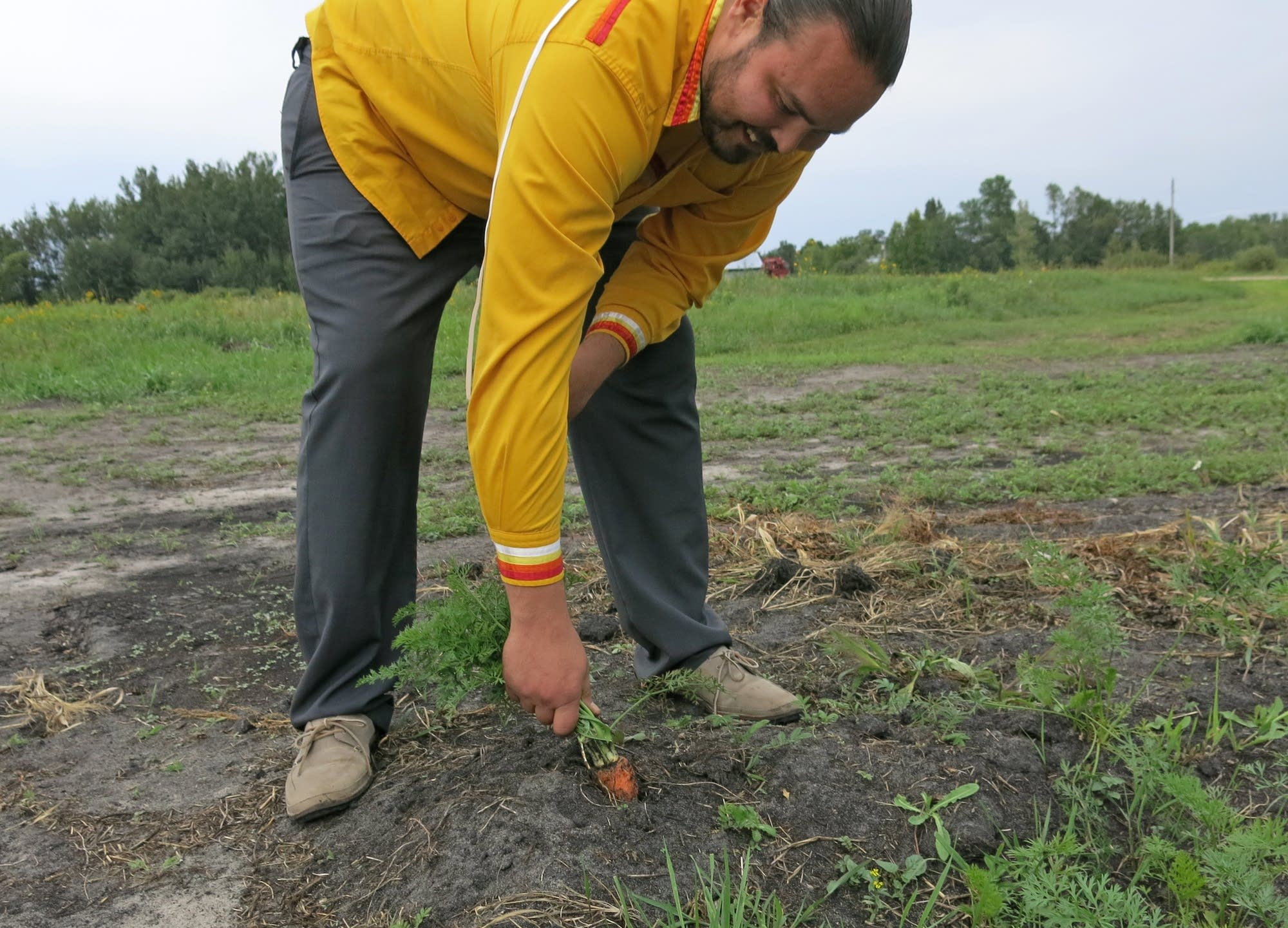 Red Lake economic development director Sam Strong picks carrots.