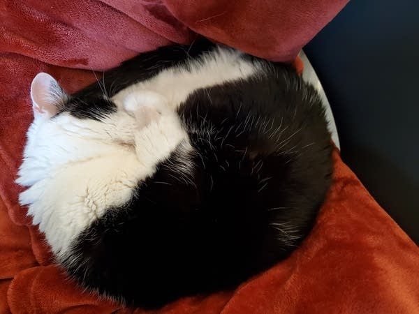 Black & white cat curled up sleeping on red blanket, face tucked into paws