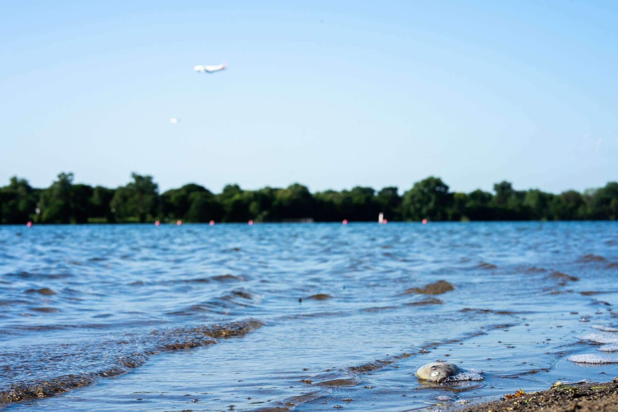 A plane descends toward over Lake Nokomis.