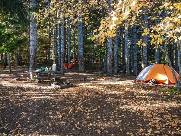 A campsite with fallen leaves on the ground