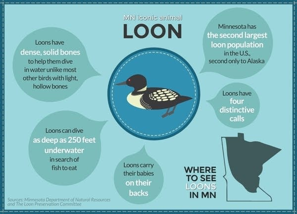 Minnesota is home to about 12,000 loons.