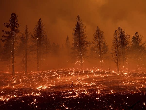 Wildfires burn in a California forest