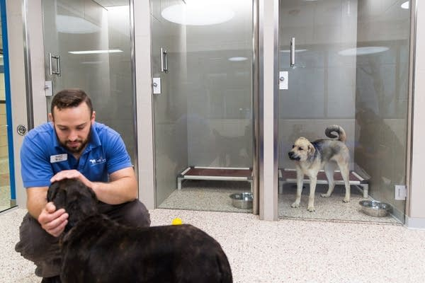 Animal care technician Kevin Feeback interacts with a dog.