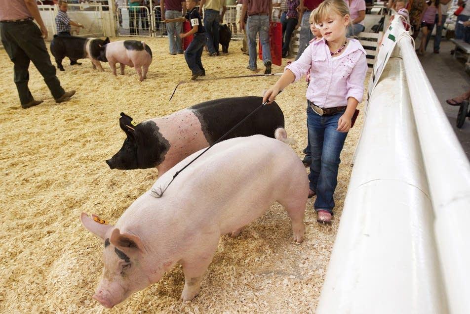The Novice Swine Competition