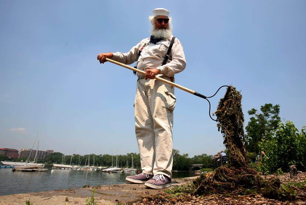 Harvesting milfoil from Lake Calhoun
