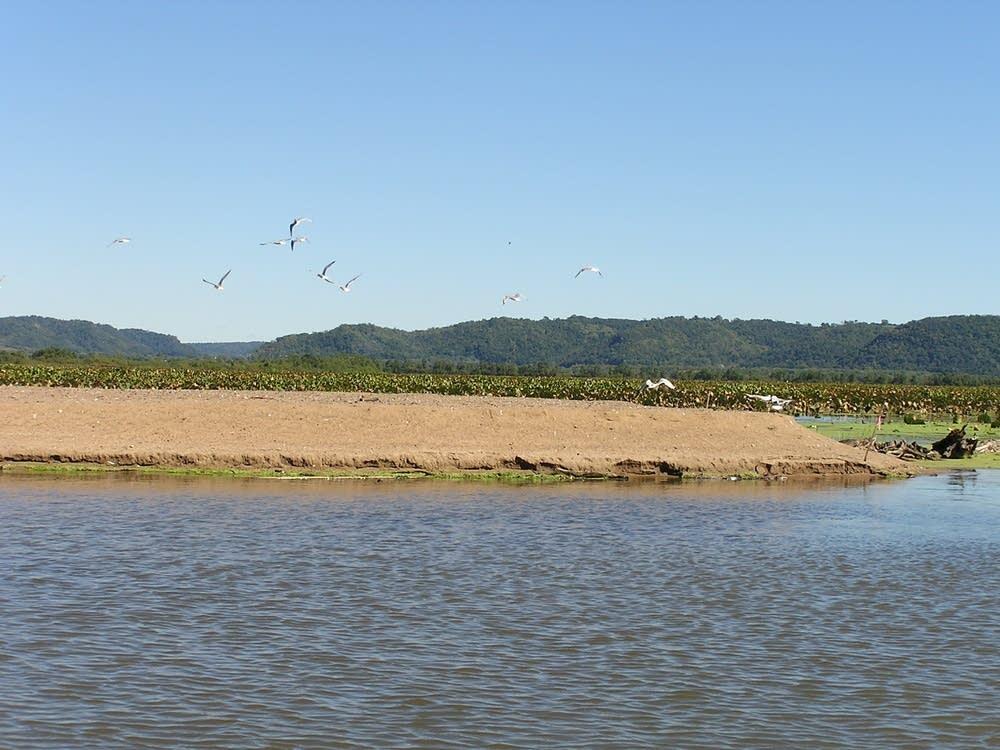Seed island