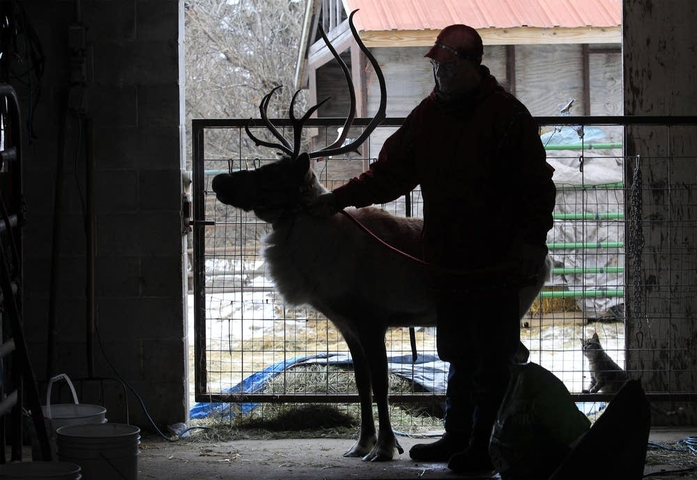 Bob Kendall and one of his reindeer