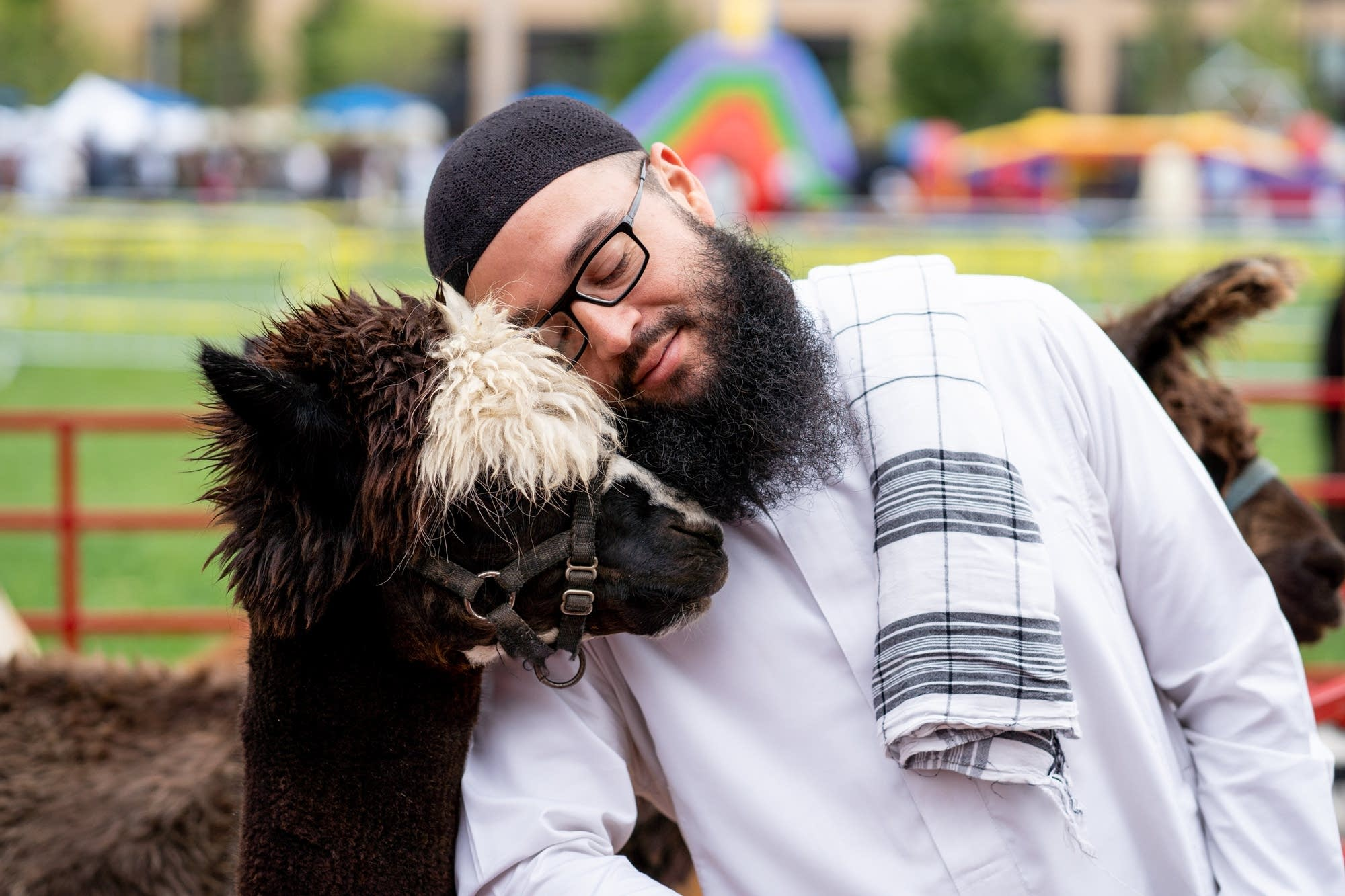 Chris Mendez snuggles with an alpaca named Al.