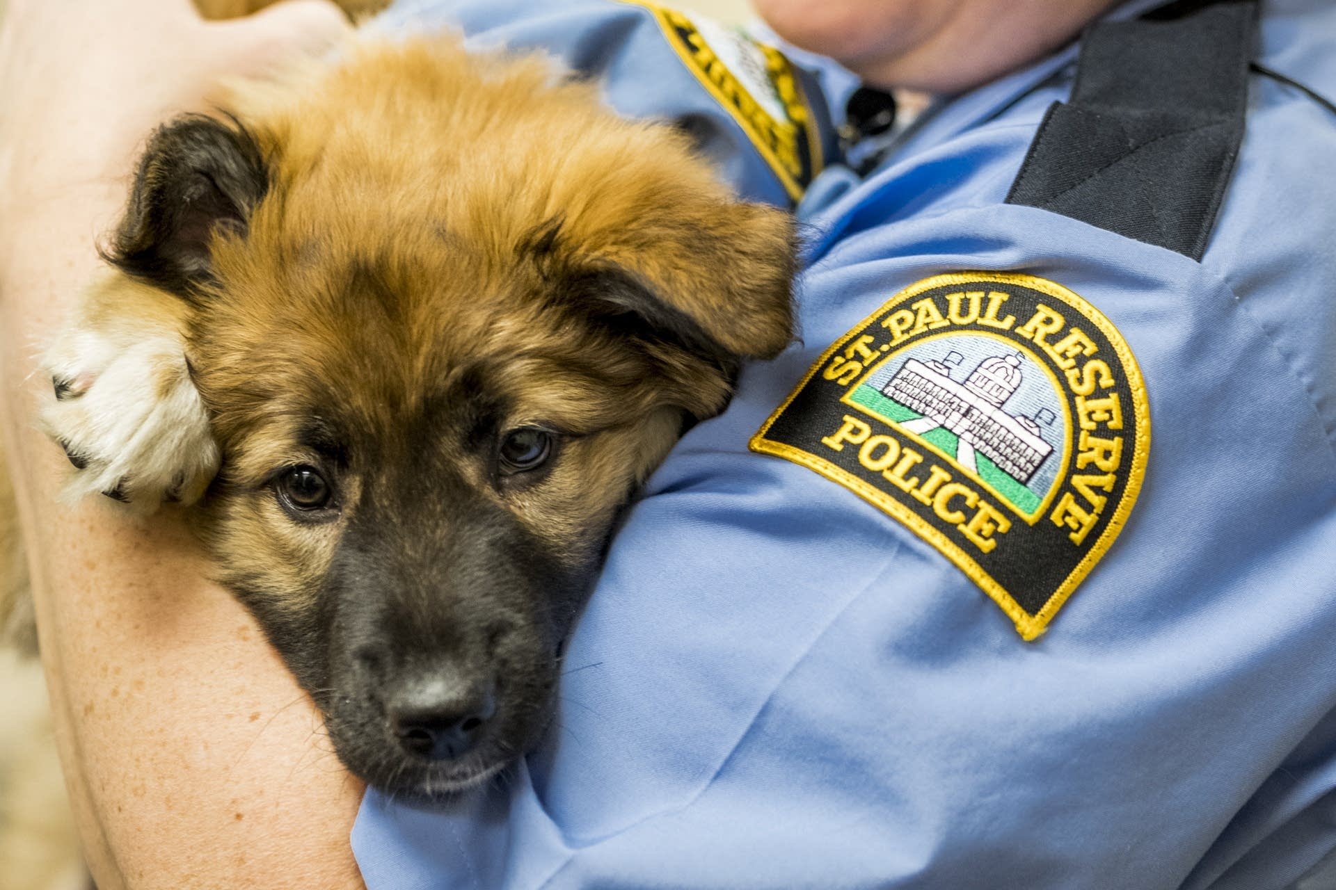 Sergeant Fuzz  is held by reserve officer Kathryn Smith