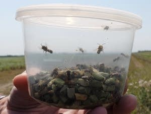 Researchers at NDSU's Insect Cryobiology and Ecophysiology lab.