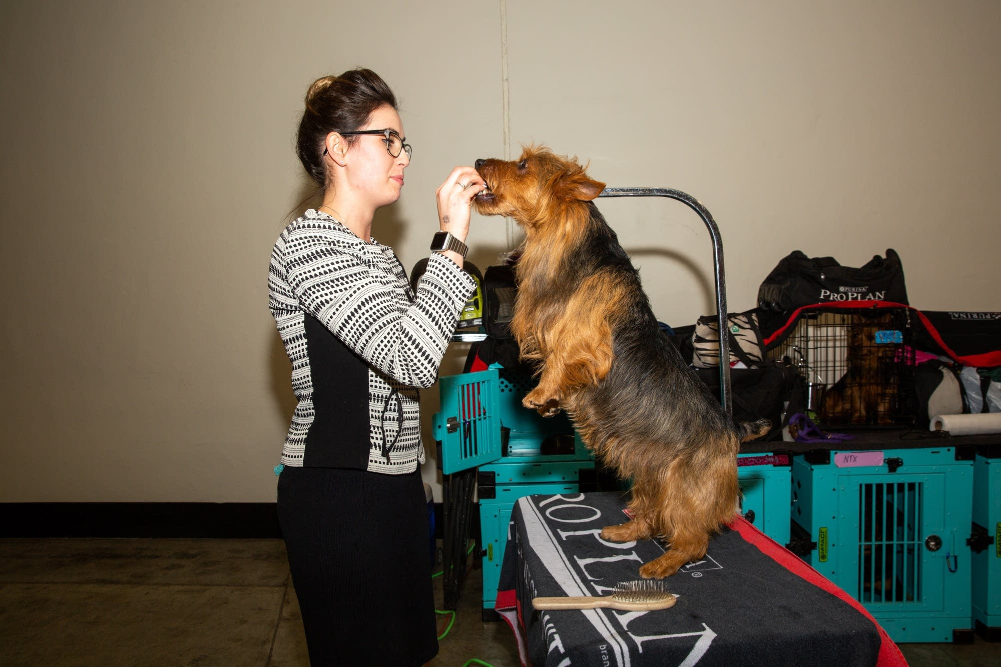 Jacquelyn Johnson gives a treat to Bacon, her Australian Terrier.