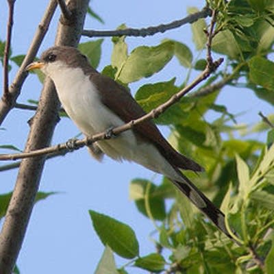 4b59d6 20090324 bird