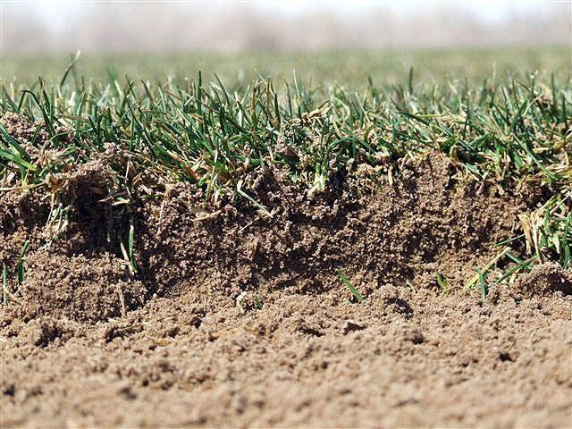 sand-based turf
