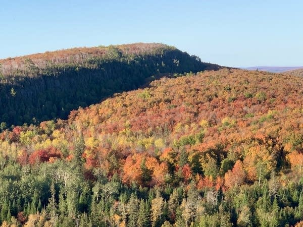 A view of fall colors on a mountain.