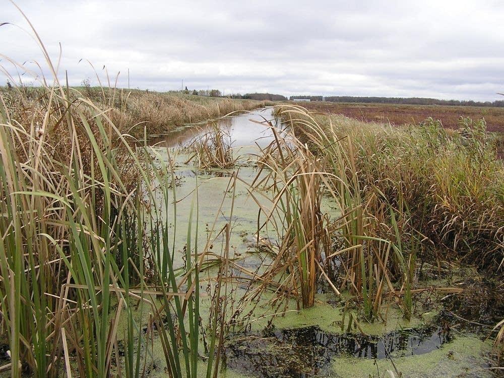 A cranberry ditch